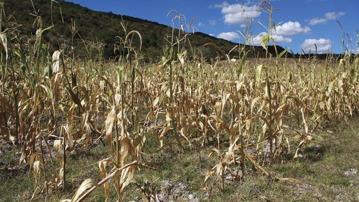 MAGA prioriza ayuda a Coatepeque, Cabricán y San Miguel Sigüilá