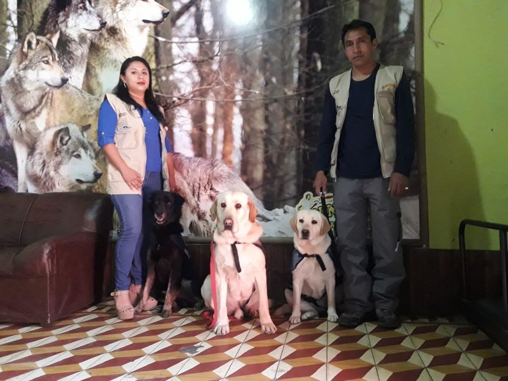 Conozca a tres perros que se dedican a brindar terapias