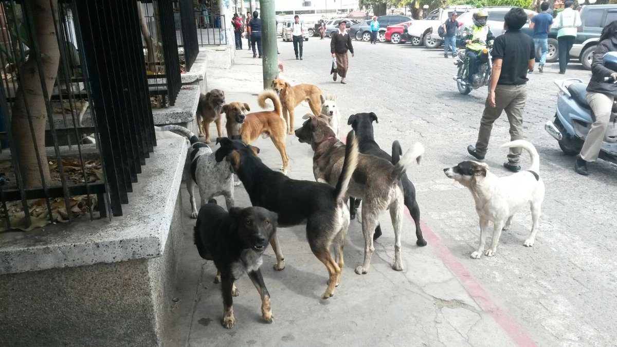 Proyecto de construcción de perrera municipal atrás de CEMERQ, quedó engavetado