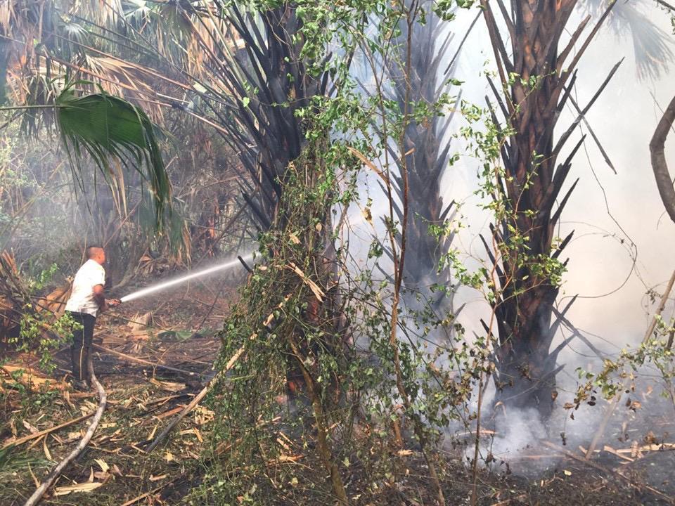 Incendio acaba con dos kilómetros de bosque de mangle en Retalhuleu