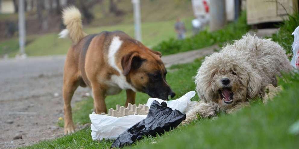 ¿En qué zonas de Xela reportan más mordeduras de perros?