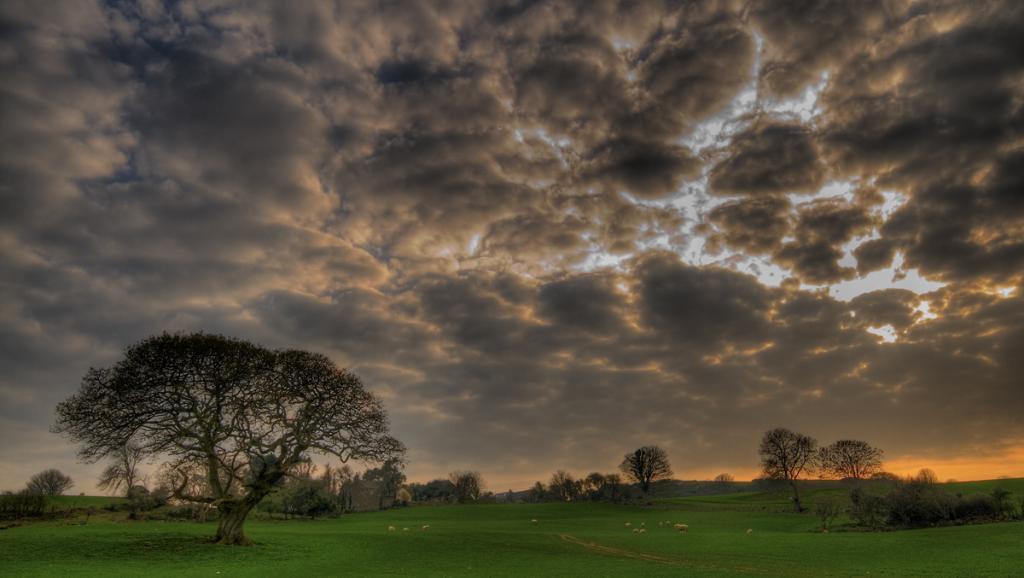 Clima y depresión verde: 'Tengo una sensación de apocalipsis'