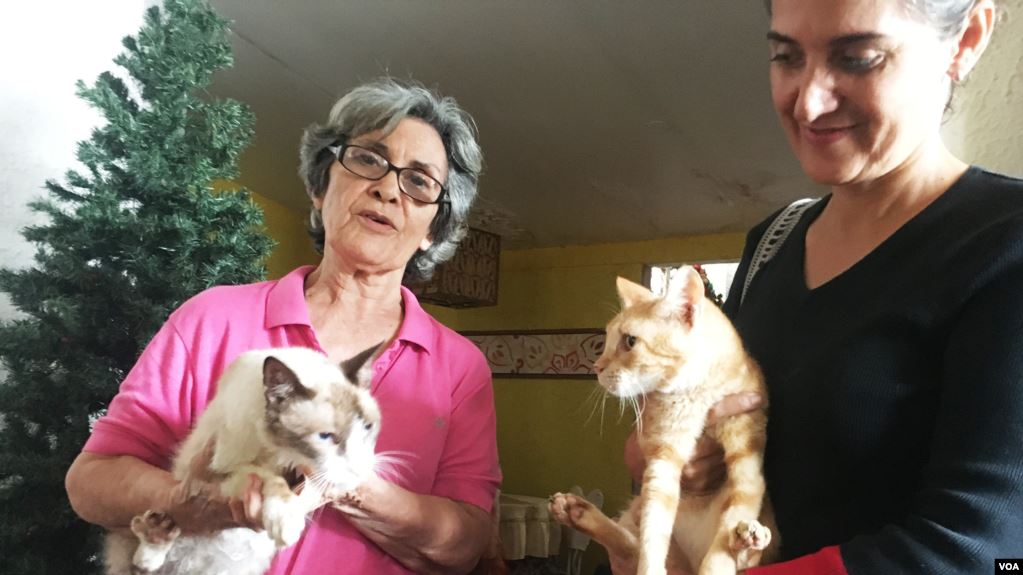 Venezolanos se las ingenian para cuidar a sus mascotas en plena crisis económica