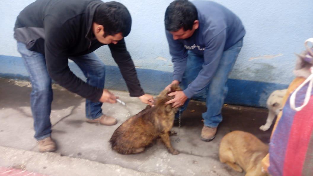Tienen previsto vacunar a más de 188 mil perros en Quetzaltenango