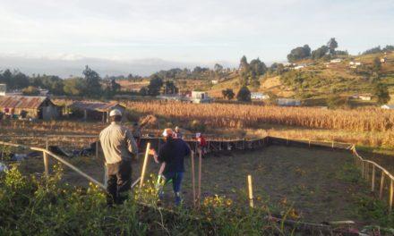 En el 2019 se perdieron más de Q8 millones por daños en el cultivo en Quetzaltenango