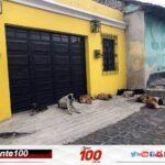 ¿Cuántas mordeduras de perros se registran en Quetzaltenango? En lo que va de 2020