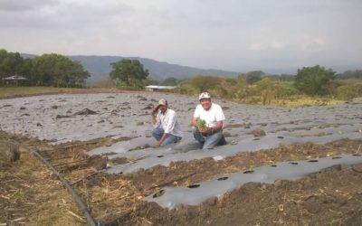 Nicaragua: agricultores preocupados por cosechas tras paso de huracanes