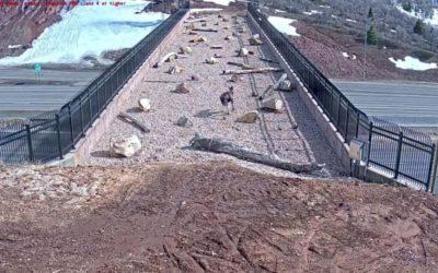 Construyen pasarela para la vida silvestre y no arriesguen su vida cruzando en las carreteras de Utah