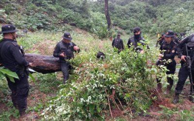 PNC erradica más de 34 mil matas de coca en un día