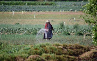 Municipalidad de Almolonga recomienda a agricultores, vacunarse contra el COVID-19
